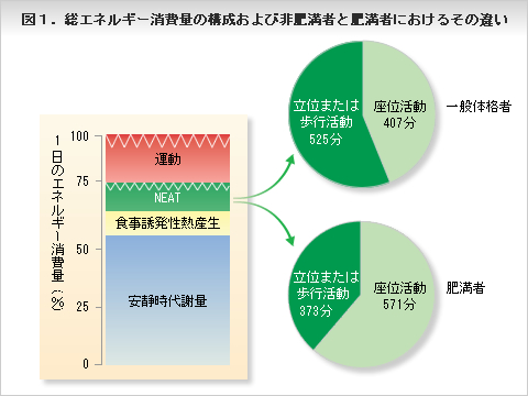 総エネルギー消費量の構成および非肥満者と肥満者におけるその違い